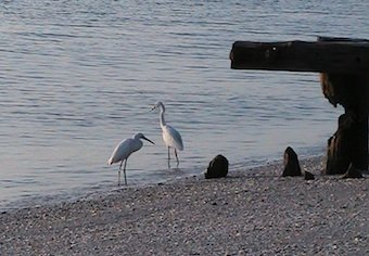Living the simple life - birds at the beach