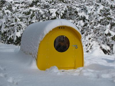 Mini Quonset Hut